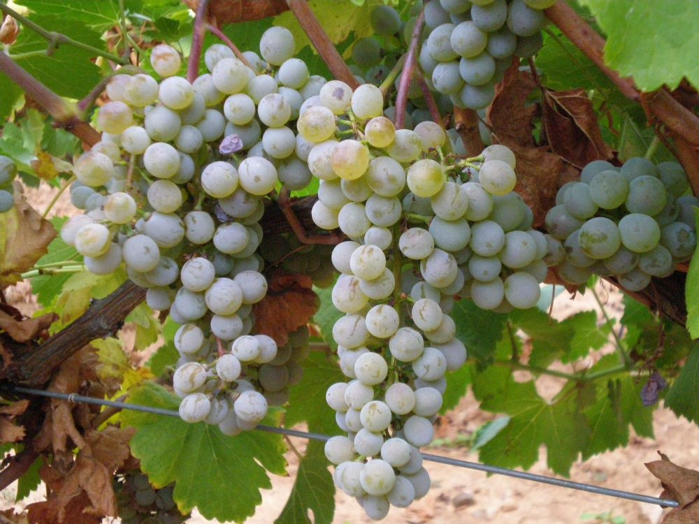 spanish wine verdejo
